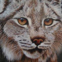 Lynx 6 3/4 x 8 1/4
