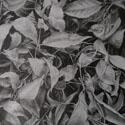 The Sparrow's Fall 8 x 113/4